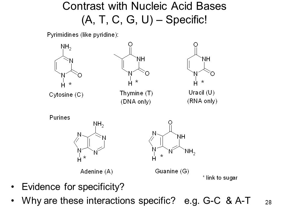 28 Contrast with Nucleic Acid Bases (A, T, C, G, U) – Specific.