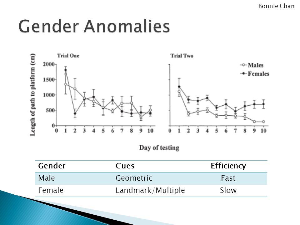 GenderCuesEfficiency MaleGeometricFast FemaleLandmark/MultipleSlow