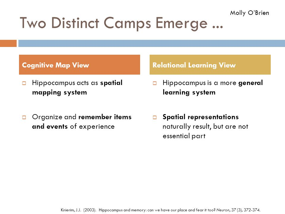 Two Distinct Camps Emerge...  Hippocampus acts as spatial mapping system  Organize and remember items and events of experience  Hippocampus is a mo