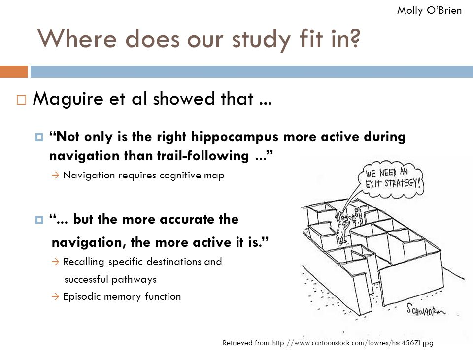 """Where does our study fit in?  Maguire et al showed that...  """"Not only is the right hippocampus more active during navigation than trail-following..."""
