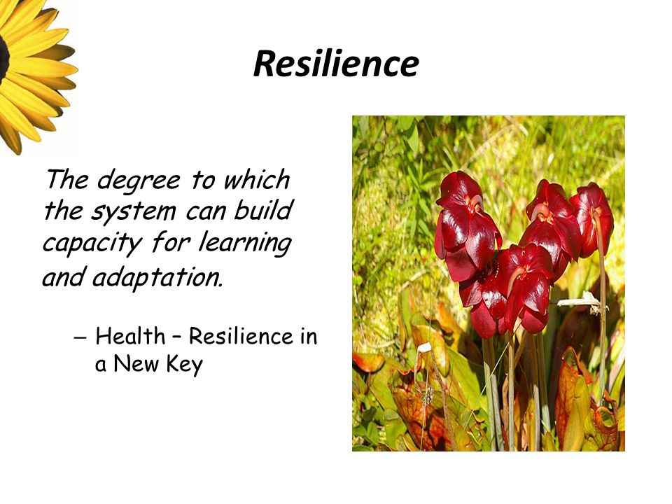 Resilience The degree to which the system can build capacity for learning and adaptation.
