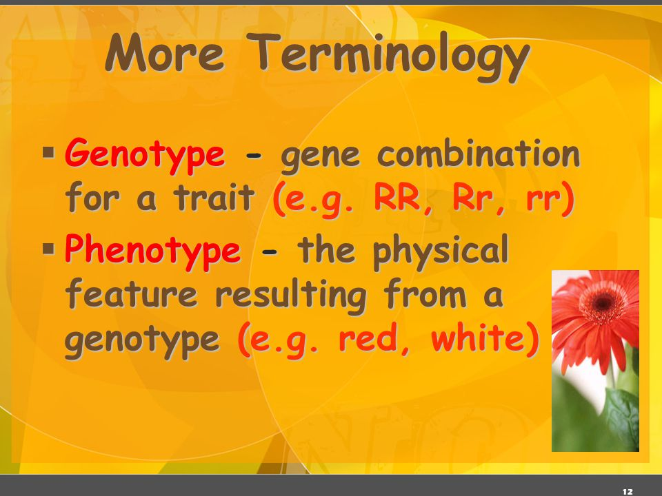 "11 Designer ""Genes""  Alleles - two forms of a gene (dominant & recessive)  Dominant - stronger of two genes expressed in the hybrid; represented by"