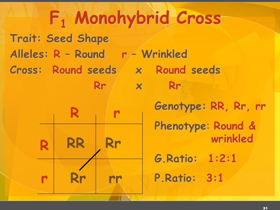 30 P 1 Monohybrid Cross Review  Homozygous dominant x Homozygous recessive  Offspring all Heterozygous (hybrids)  Offspring called F 1 generation 