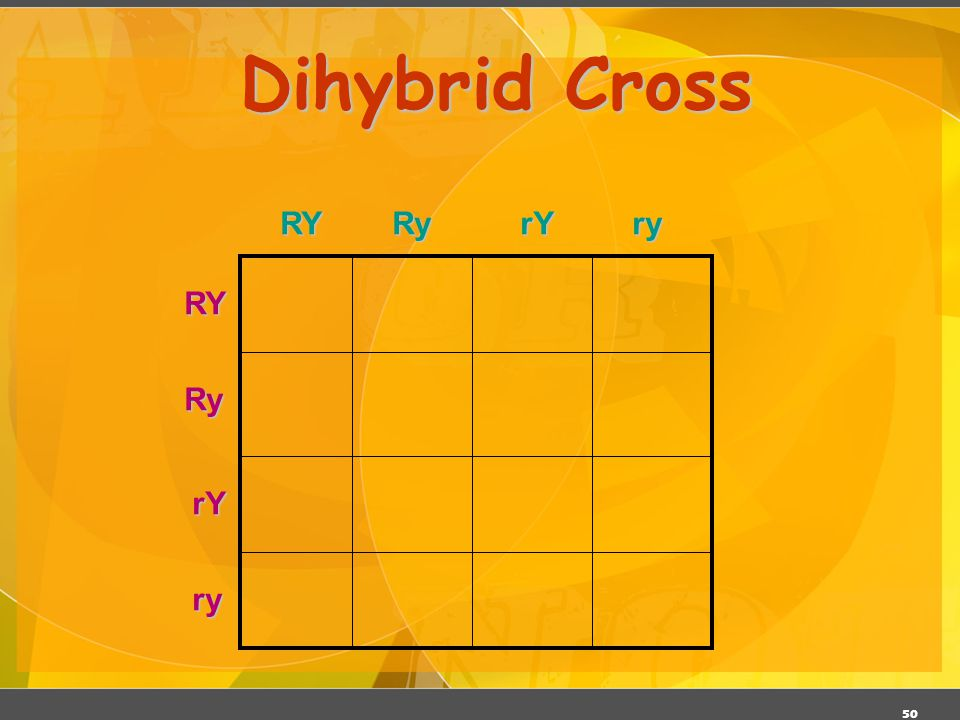49 Dihybrid Cross Traits: Seed shape & Seed color Alleles: Alleles: R round r wrinkled Y yellow y green RrYy x RrYy RY Ry rY ry All possible gamete co