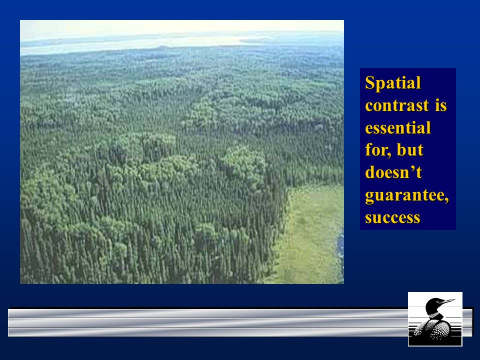 Spatial contrast is essential for, but doesn't guarantee, success