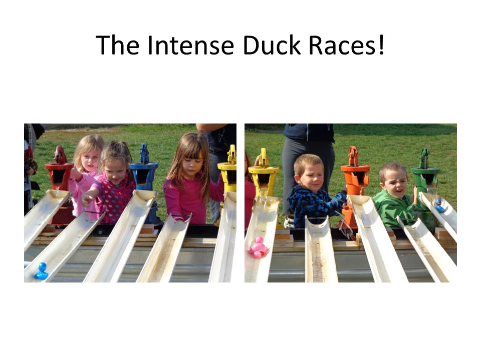The Intense Duck Races!