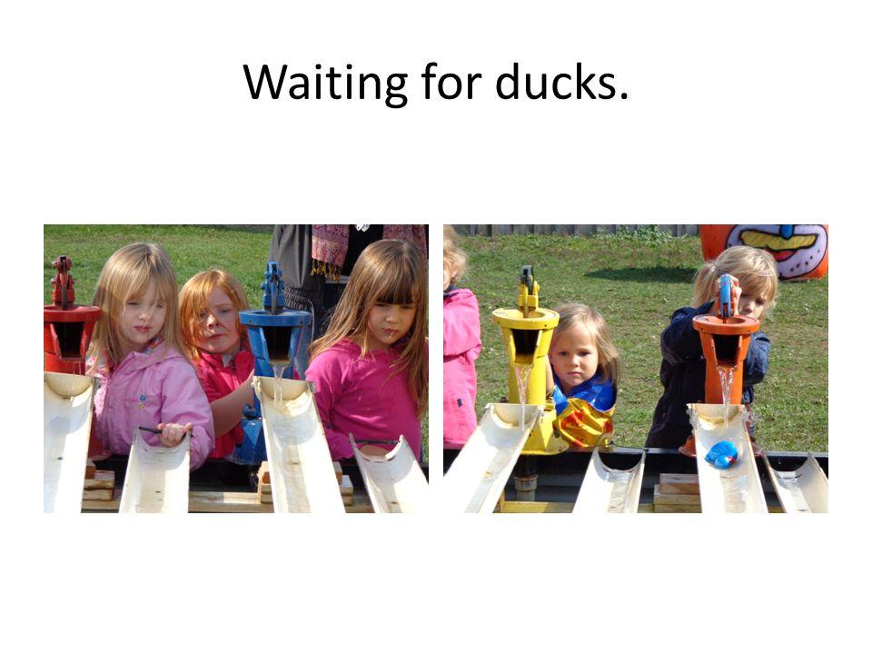 Waiting for ducks.