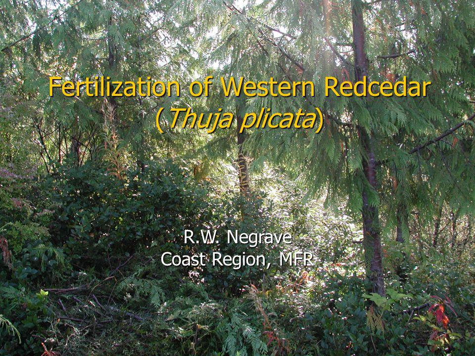 Fertilization of Western Redcedar (Thuja plicata) R.W. Negrave Coast Region, MFR
