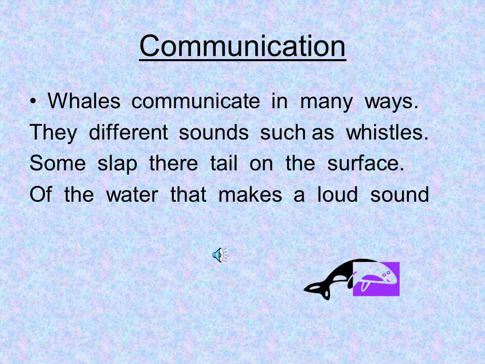 Communication Whales communicate in many ways. They different sounds such as whistles. Some slap there tail on the surface. Of the water that makes a