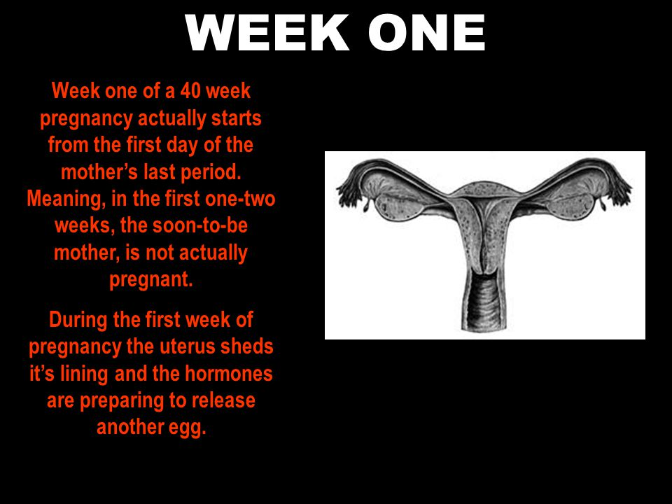 WEEK ONE Week one of a 40 week pregnancy actually starts from the first day of the mother's last period.