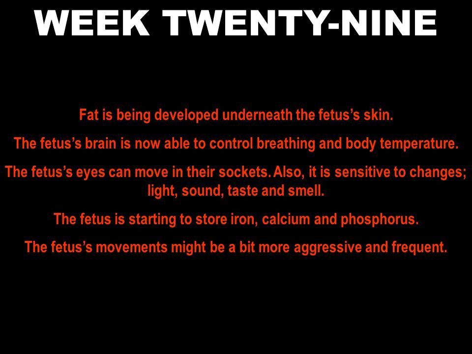 WEEK TWENTY-NINE Fat is being developed underneath the fetus's skin.