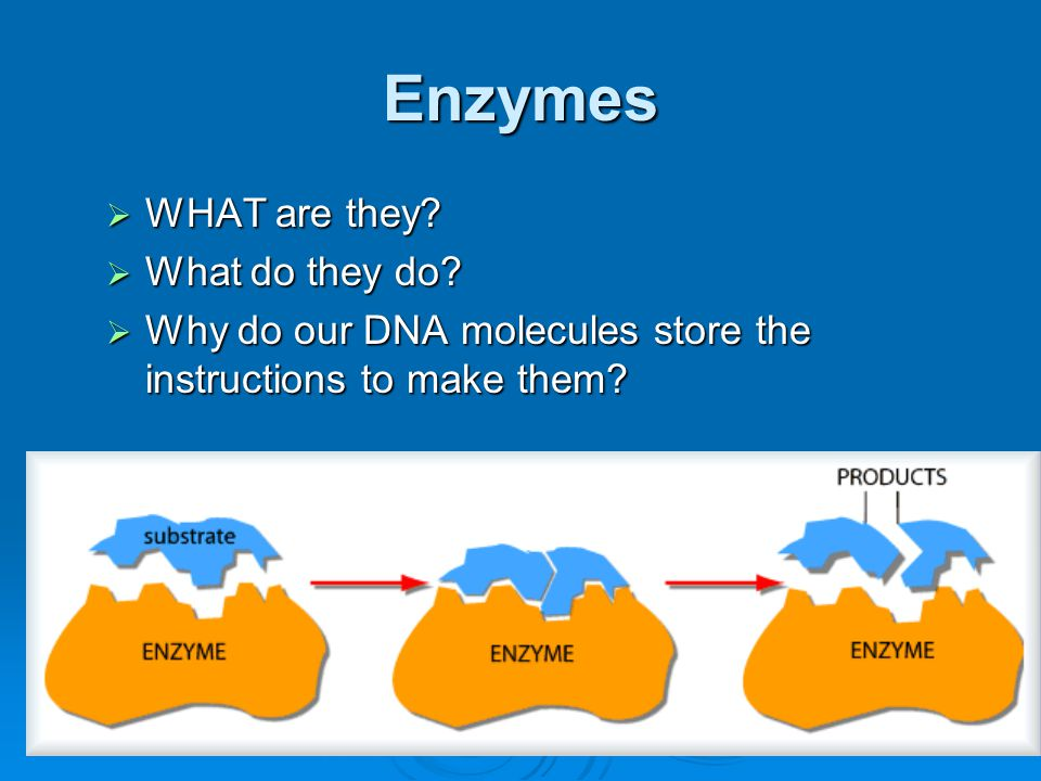 Genes -WHAT are they? -WHERE are they? -How many genes do we have? -WHY are we storing the information for PROTEINS???
