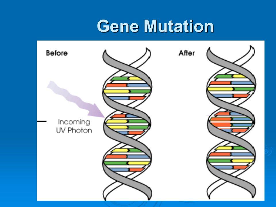 One Gene = One Protein.