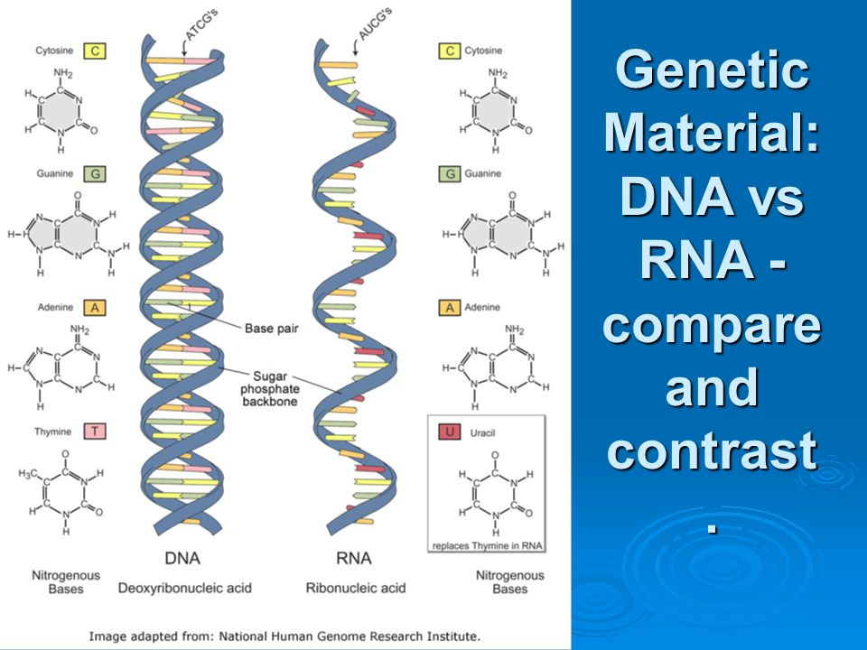 DNA vocab  Deoxyribonucleic acid  Chromosomes  Chromatin  Genes  Genome