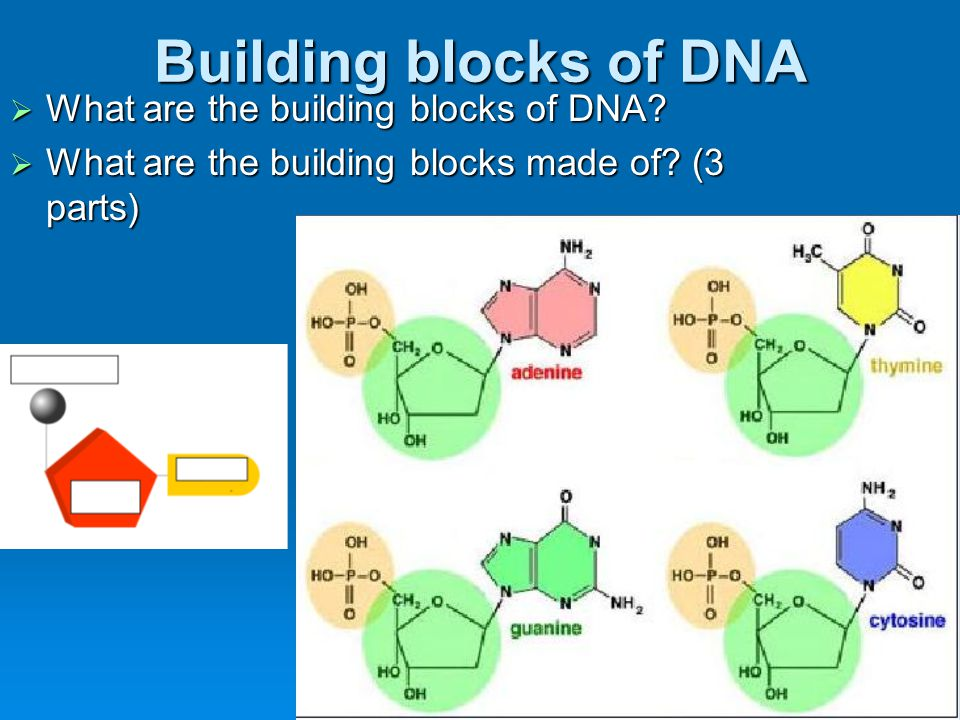 DNA Structure  What is the structure called?