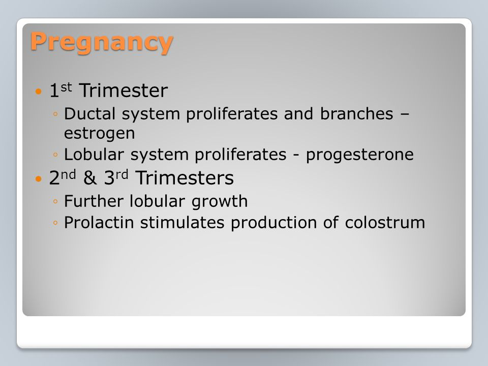 Pregnancy 1 st Trimester ◦Ductal system proliferates and branches – estrogen ◦Lobular system proliferates - progesterone 2 nd & 3 rd Trimesters ◦Further lobular growth ◦Prolactin stimulates production of colostrum