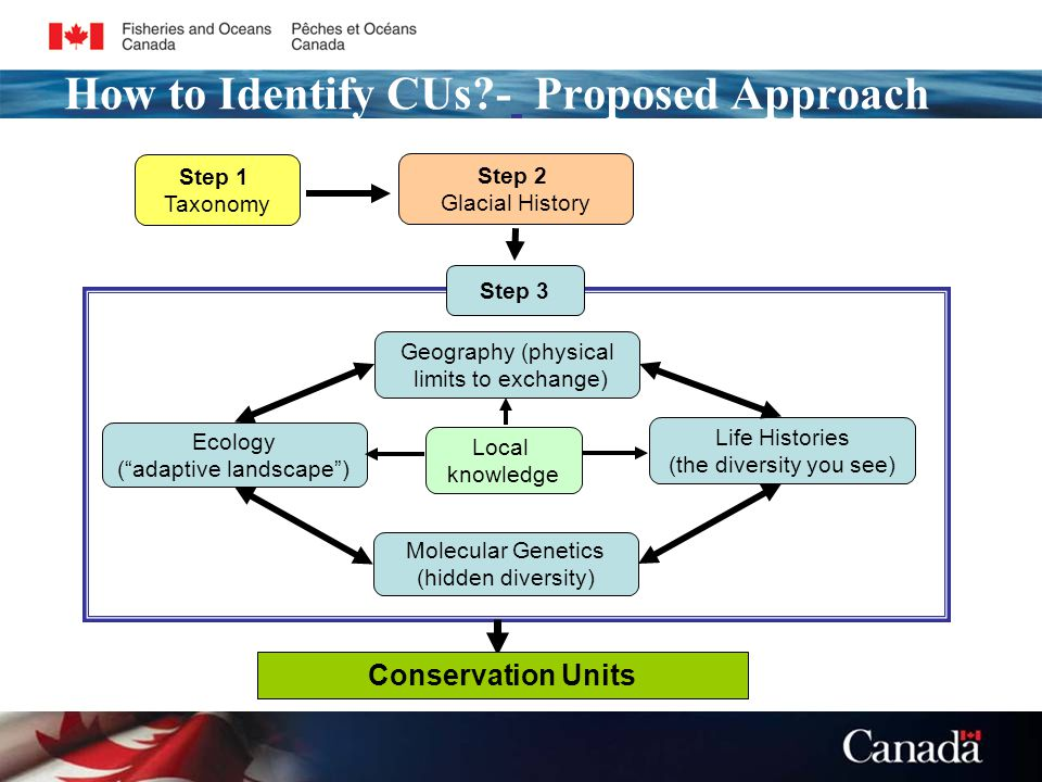 How to Identify CUs - Proposed Approach Step 1 Taxonomy Step 2 Glacial History Life Histories (the diversity you see) Local knowledge Ecology ( adaptive landscape ) Geography (physical limits to exchange) Molecular Genetics (hidden diversity) Step 3 Conservation Units