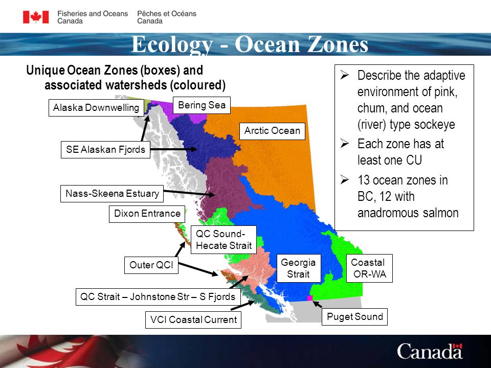 Unique Ocean Zones (boxes) and associated watersheds (coloured) QC Sound- Hecate Strait Alaska Downwelling Arctic Ocean Bering Sea SE Alaskan Fjords Nass-Skeena Estuary Outer QCI Dixon Entrance Georgia Strait Coastal OR-WA QC Strait – Johnstone Str – S Fjords VCI Coastal Current Puget Sound  Describe the adaptive environment of pink, chum, and ocean (river) type sockeye  Each zone has at least one CU  13 ocean zones in BC, 12 with anadromous salmon Ecology - Ocean Zones