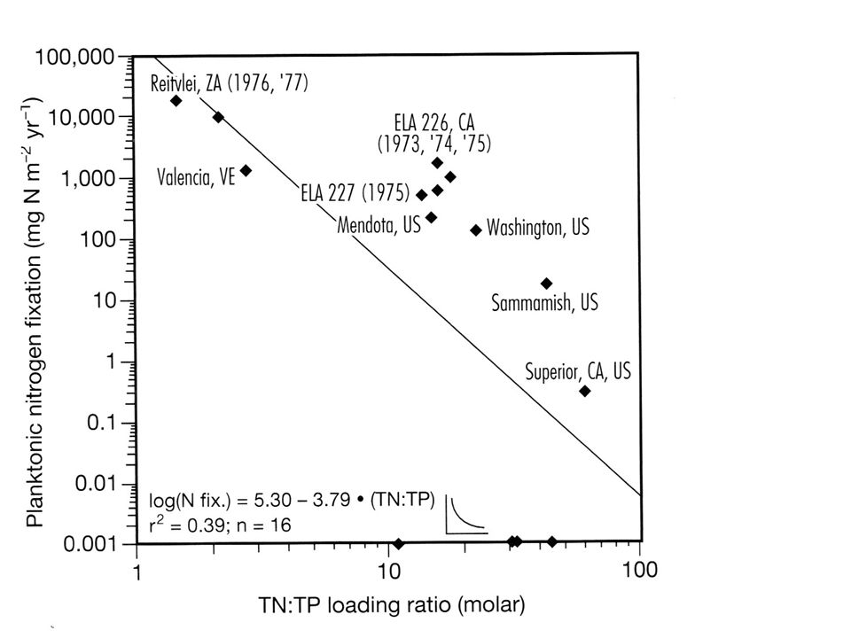 Nutrients like N and P tend to accumulate in the hypolimnion during summer stratification— sedimentation.