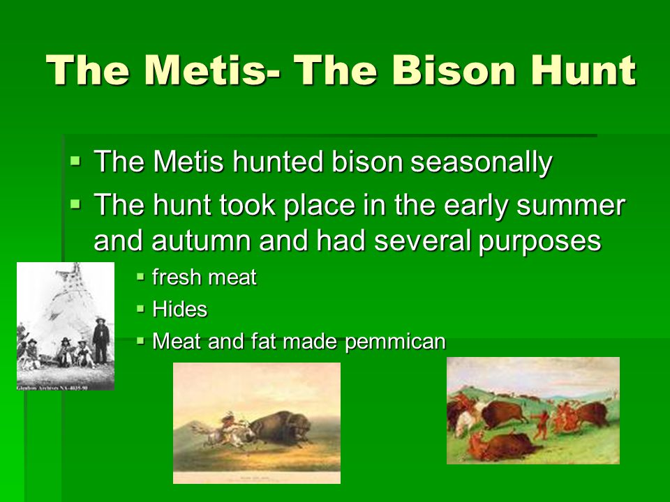 The Metis- The Bison Hunt  The Metis hunted bison seasonally  The hunt took place in the early summer and autumn and had several purposes  fresh me
