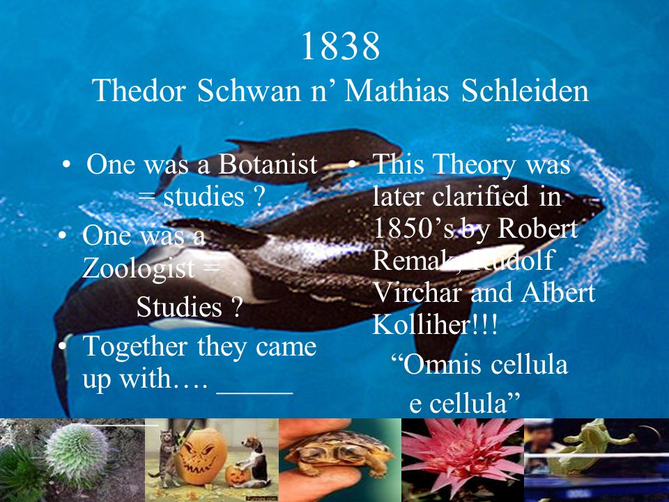 1838 Thedor Schwan n' Mathias Schleiden One was a Botanist = studies .