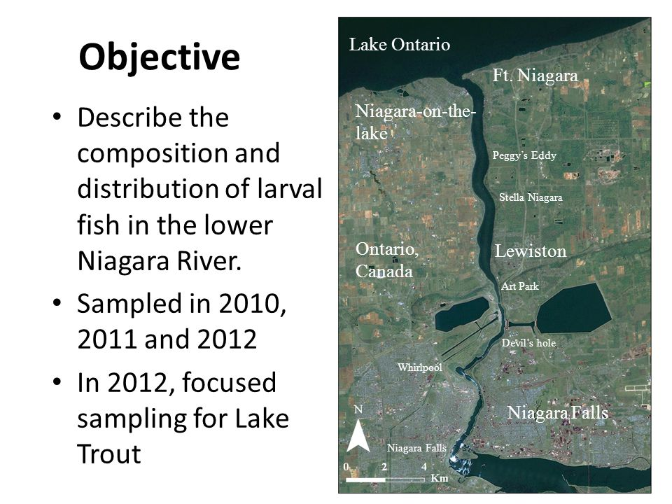 Objective Describe the composition and distribution of larval fish in the lower Niagara River.