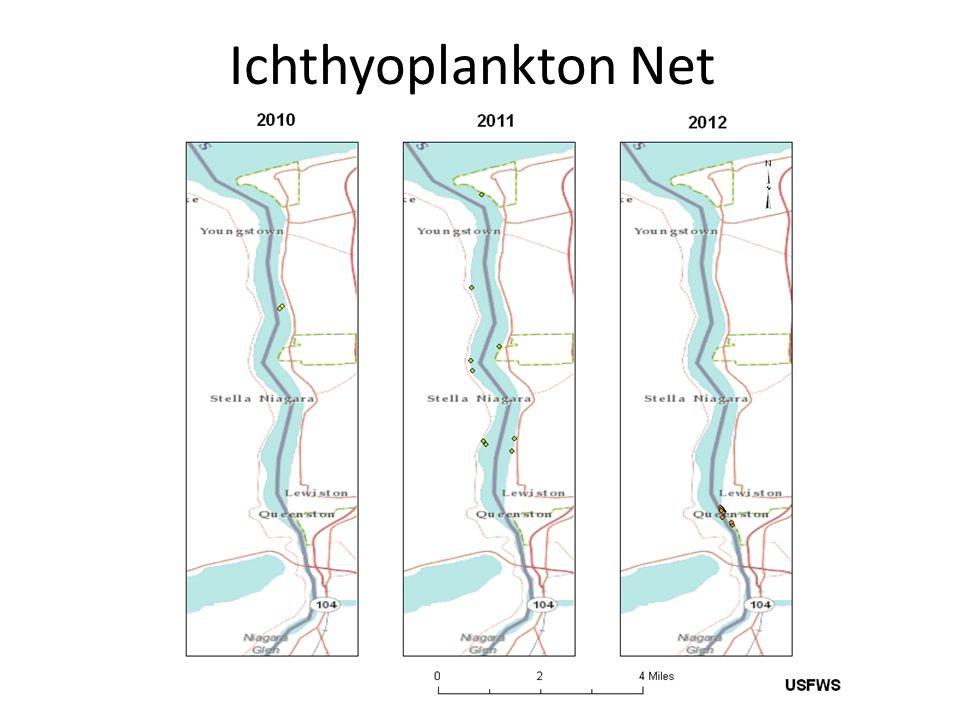 Ichthyoplankton Net