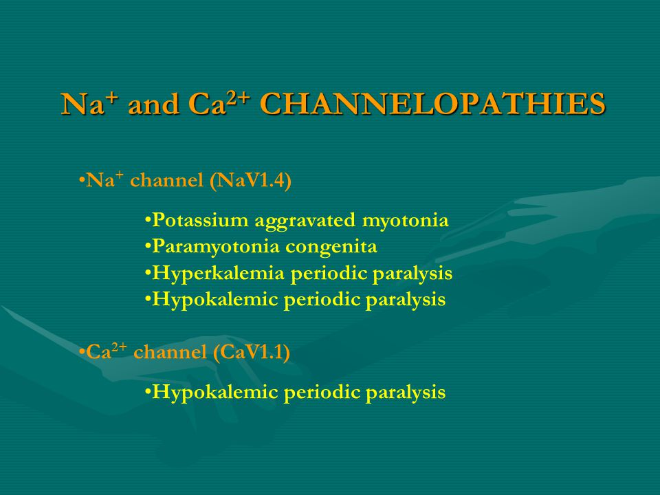 Na + and Ca 2+ CHANNELOPATHIES Na + channel (NaV1.4) Potassium aggravated myotonia Paramyotonia congenita Hyperkalemia periodic paralysis Hypokalemic periodic paralysis Ca 2+ channel (CaV1.1) Hypokalemic periodic paralysis