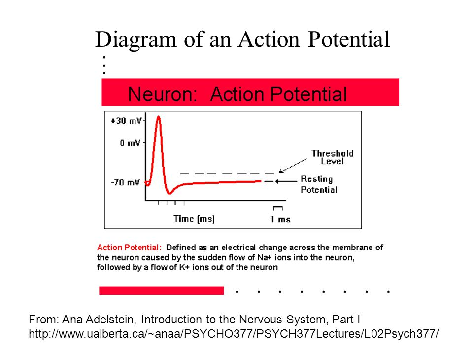 Additional References Haykin, Simon: Neural Networks – A Comprehensive Foundation, Prentice-Hall, 1995.