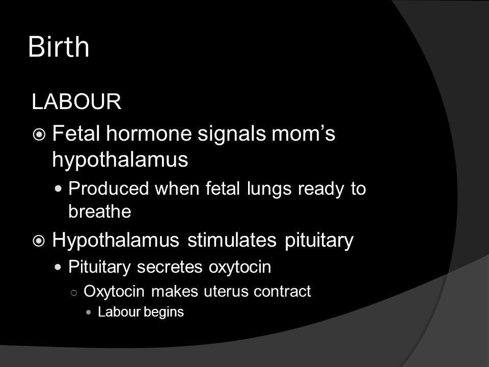 Birth LABOUR  Fetal hormone signals mom's hypothalamus Produced when fetal lungs ready to breathe  Hypothalamus stimulates pituitary Pituitary secretes oxytocin ○ Oxytocin makes uterus contract Labour begins