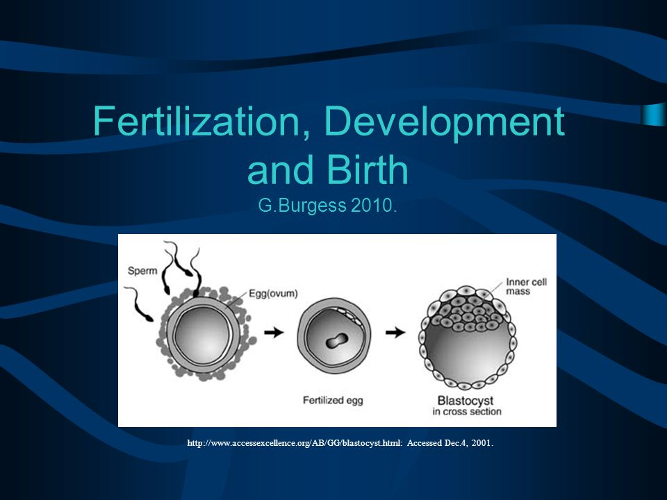 Fertilization, Development and Birth G.Burgess 2010.