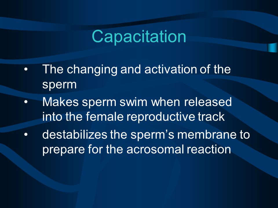 Capacitation The changing and activation of the sperm Makes sperm swim when released into the female reproductive track destabilizes the sperm's membrane to prepare for the acrosomal reaction