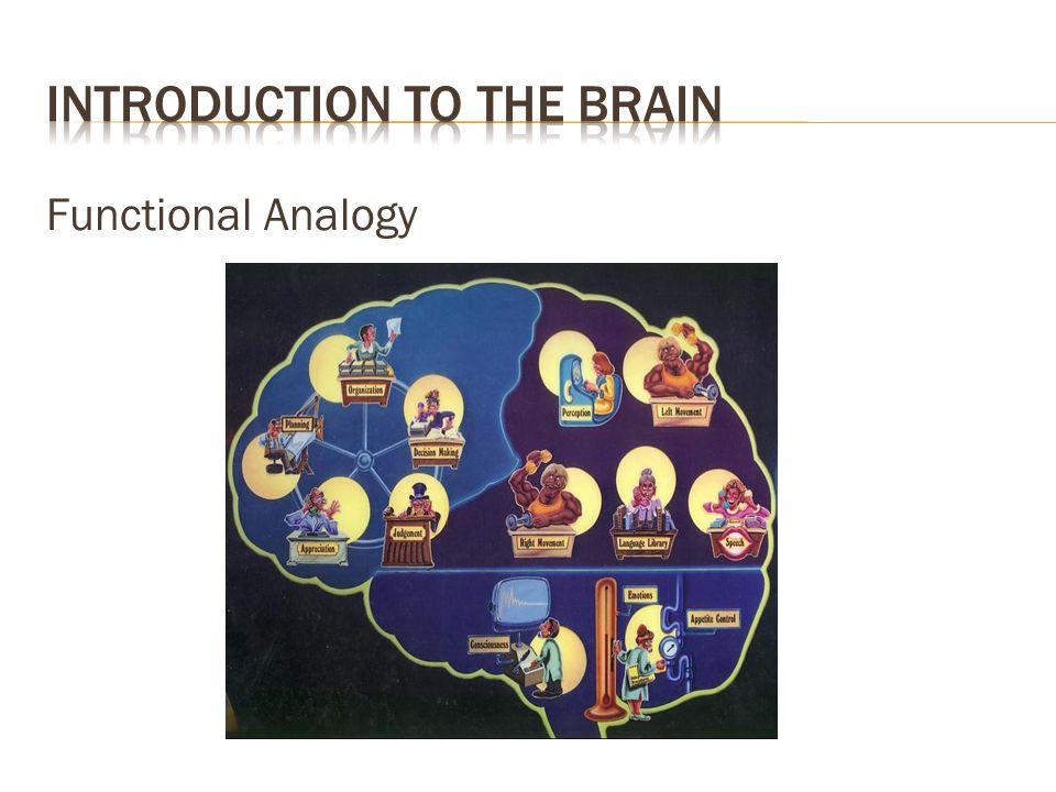 Functional Analogy
