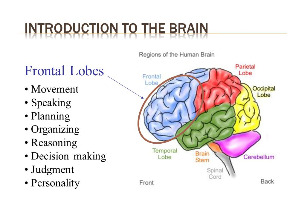  Affects brain and spinal cord  Altered motor, sensory, and cognitive functioning  Common presenting symptoms (Olek 2005)  Symptoms vary according to disease course SymptomFrequency (%) Sensory disturbance - limbs 30.7 Visual loss15.9 Motor disturbance (subacute) 8.9 Diplopia6.8 Gait disturbance4.8 Motor (acute)4.3 Balance problems2.9 Sensory disturbance (face) 2.8