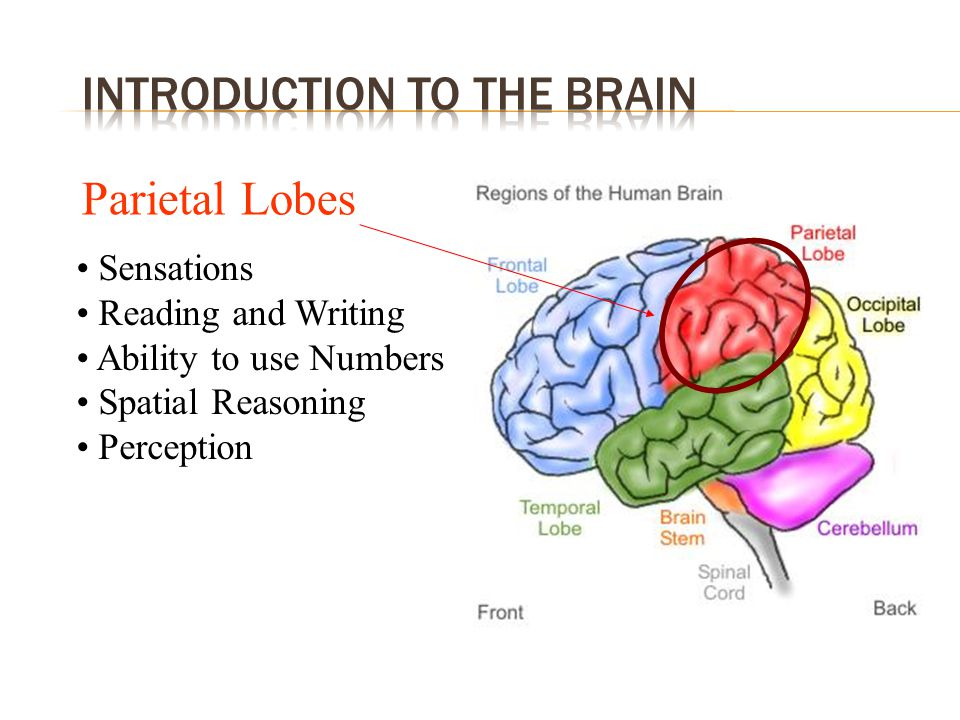 1.Introduction to the brain 2. Understanding MS 3.