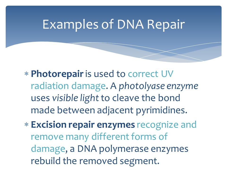  Photorepair is used to correct UV radiation damage. A photolyase enzyme uses visible light to cleave the bond made between adjacent pyrimidines.  E