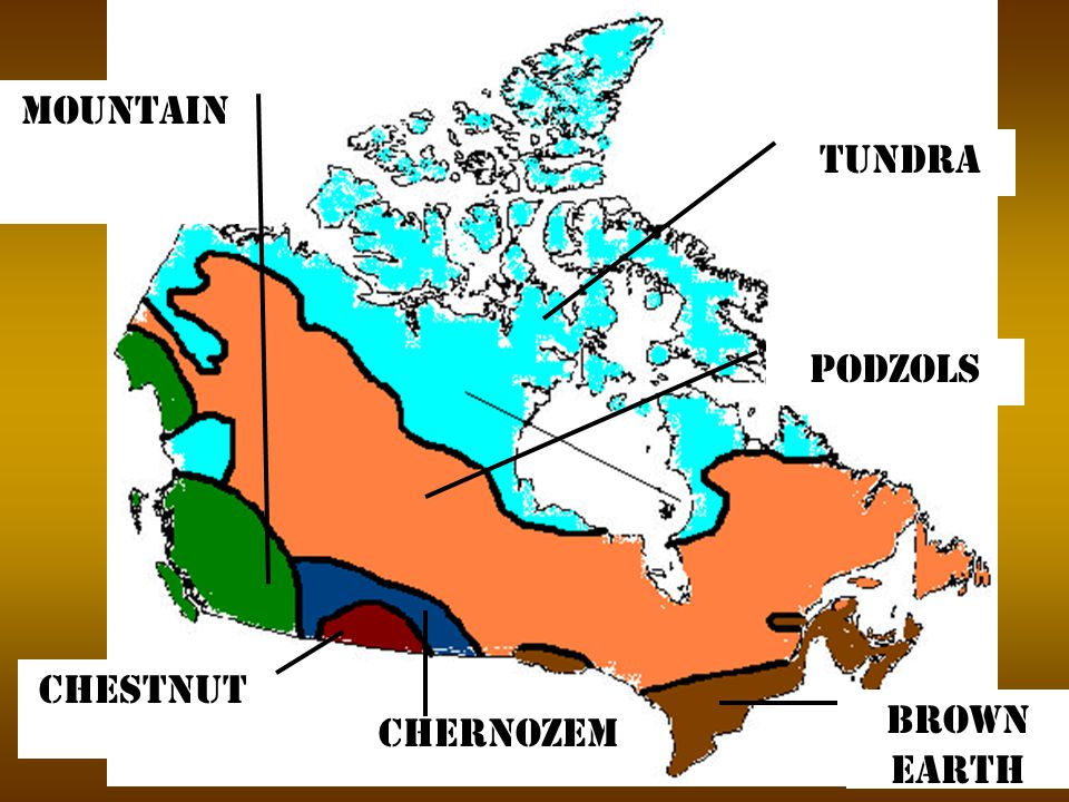 Tundra Podzols Brown earth Chestnut Chernozem Mountain
