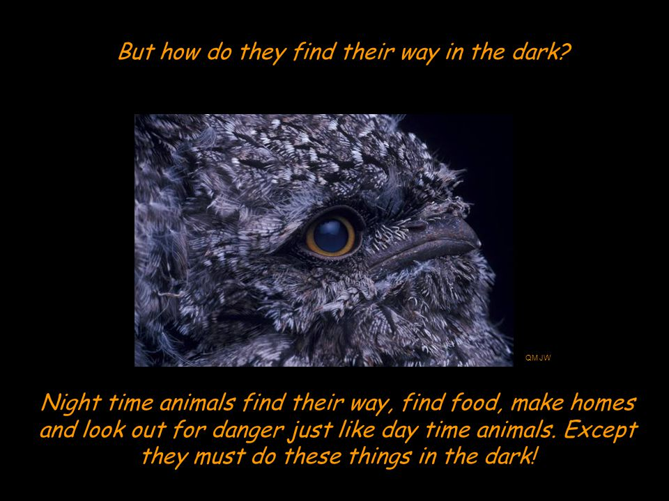Night time animals find their way, find food, make homes and look out for danger just like day time animals.