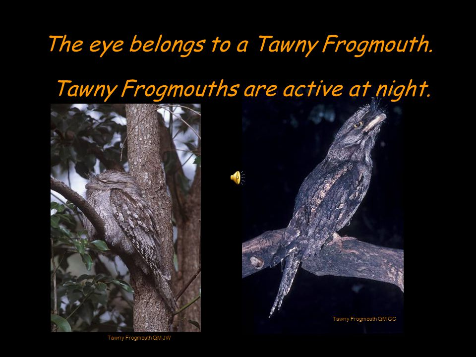 It is often difficult for scientists to study nocturnal animals.