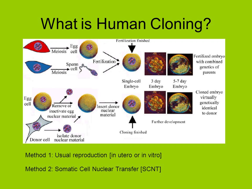 What is Human Cloning? Method 1: Usual reproduction [in utero or in vitro] Method 2: Somatic Cell Nuclear Transfer [SCNT]