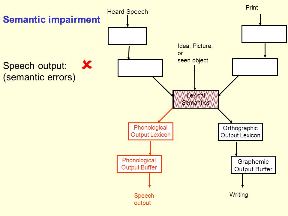 Phonological Output Lexicon Speech output Phonological Output Buffer Lexical Semantics Orthographic Output Lexicon Graphemic Output Buffer Writing Heard Speech Print Idea, Picture, or seen object Semantic impairment Lexical Semantics Semantic impairment Speech output: (semantic errors) 