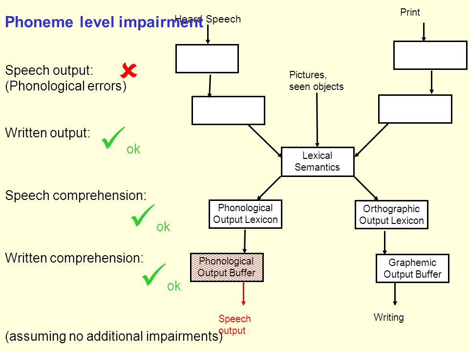 Phonological Output Lexicon Speech output Phonological Output Buffer Lexical Semantics Orthographic Output Lexicon Graphemic Output Buffer Writing Heard Speech Print Pictures, seen objects Phoneme level impairment Speech output: (Phonological errors) Written output: Speech comprehension: Written comprehension: (assuming no additional impairments)  ok