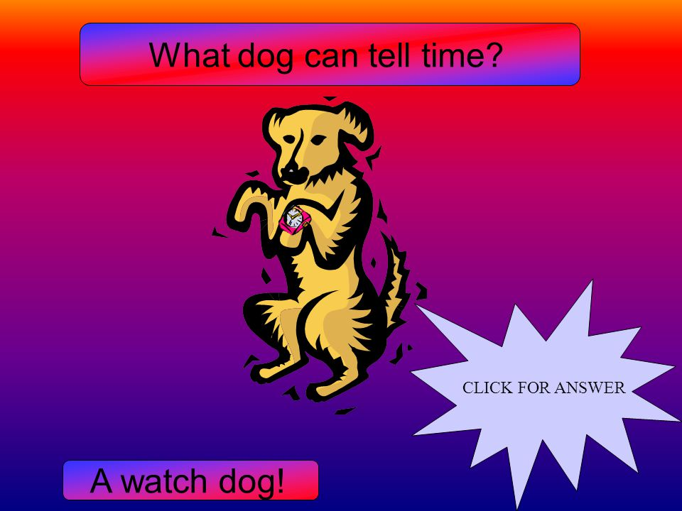 What dog can tell time? A watch dog!