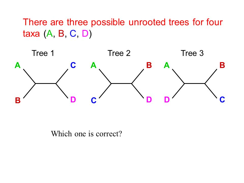 There are three possible unrooted trees for four taxa (A, B, C, D) AC B D Tree 1 AB C D Tree 2 AB D C Tree 3 Which one is correct?