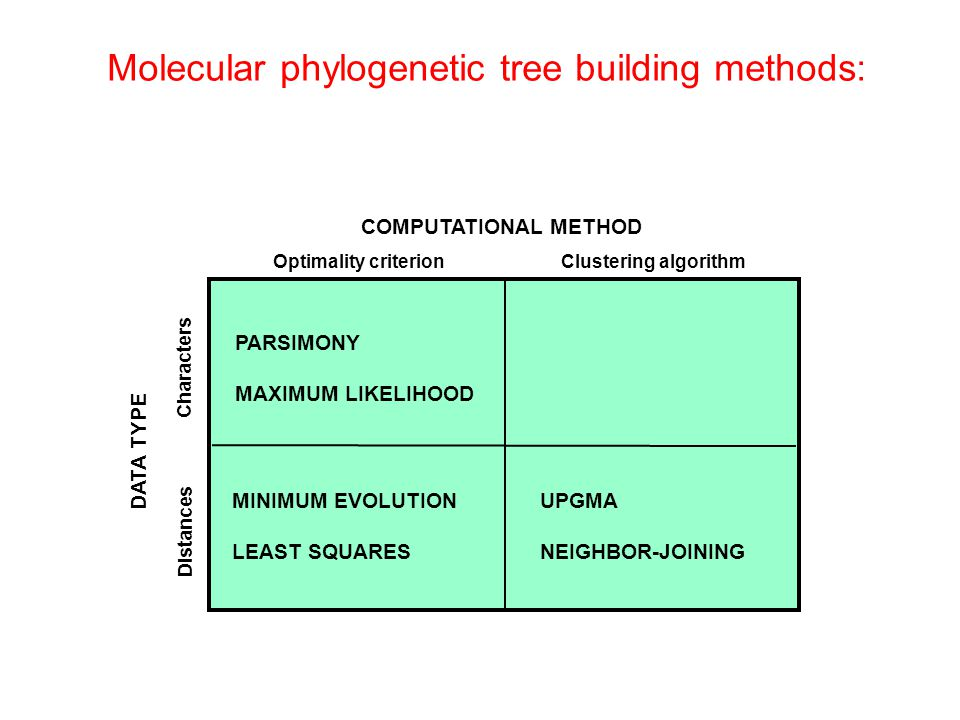 Molecular phylogenetic tree building methods: COMPUTATIONAL METHOD Clustering algorithmOptimality criterion DATA TYPE Characters Distances PARSIMONY M