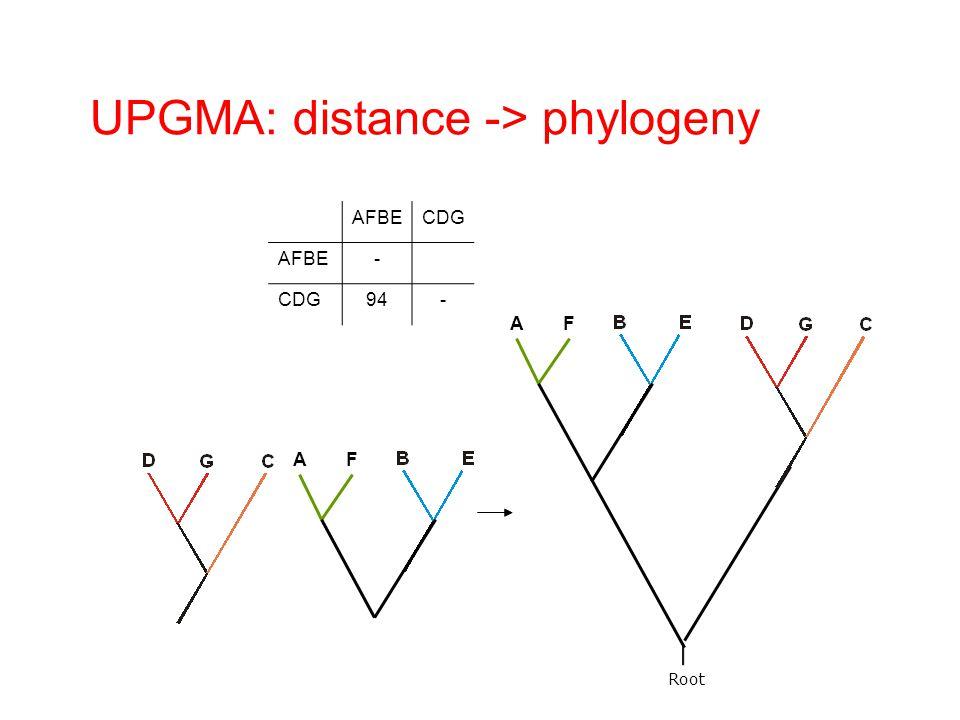 Root AFBECDG AFBE- CDG94- AF UPGMA: distance -> phylogeny AF