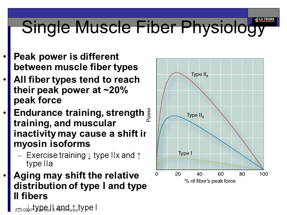 EDU2EXP Exercise & Performance Single Muscle Fiber Physiology Peak power is different between muscle fiber types All fiber types tend to reach their peak power at ~20% peak force Endurance training, strength training, and muscular inactivity may cause a shift in myosin isoforms – Exercise training ↓ type IIx and ↑ type IIa Aging may shift the relative distribution of type I and type II fibers – ↓ type II and ↑ type I