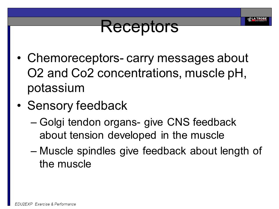 Receptors Chemoreceptors- carry messages about O2 and Co2 concentrations, muscle pH, potassium Sensory feedback –Golgi tendon organs- give CNS feedback about tension developed in the muscle –Muscle spindles give feedback about length of the muscle