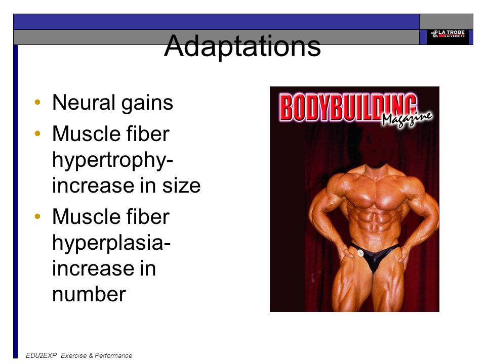 EDU2EXP Exercise & Performance Adaptations Neural gains Muscle fiber hypertrophy- increase in size Muscle fiber hyperplasia- increase in number