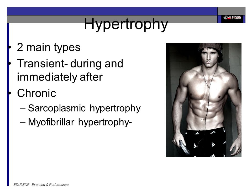 EDU2EXP Exercise & Performance Hypertrophy 2 main types Transient- during and immediately after Chronic –Sarcoplasmic hypertrophy –Myofibrillar hypertrophy-
